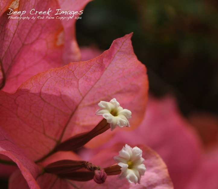 rob paine tiny white blooms