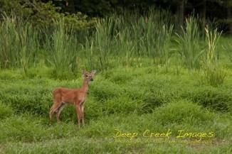 rob paine huntley meadows