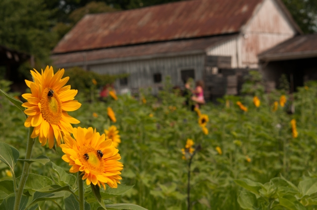 flowers and barnsNAT_7861