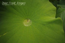 greenspring 4 rob paine