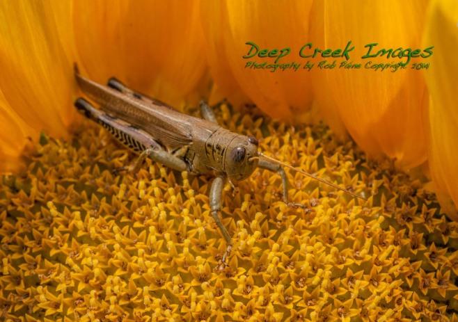 inside a sunflower
