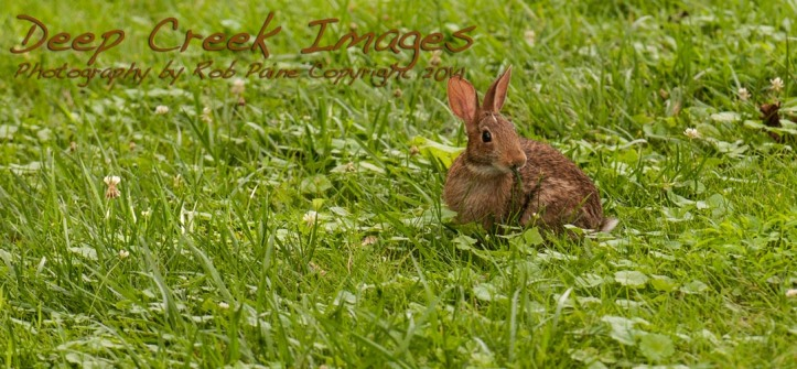 rob paine bunny munching