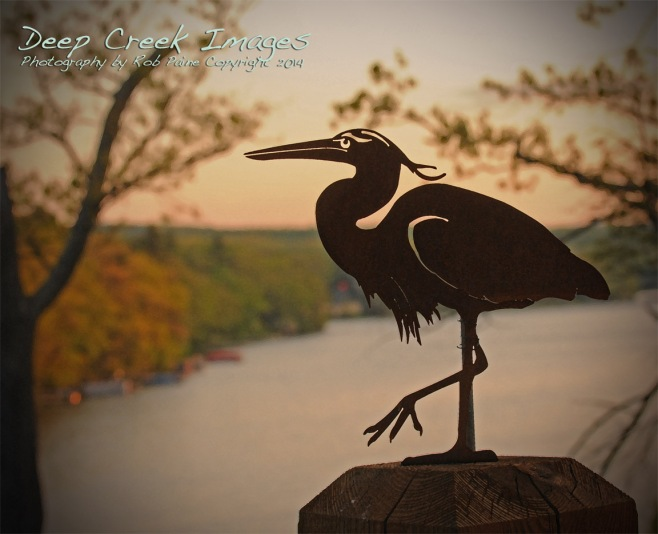 Rob Paine Heron