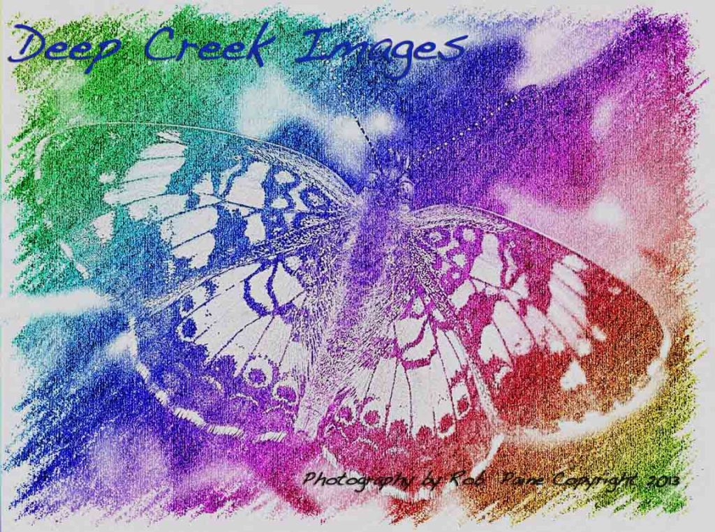 butterfly photo drawing