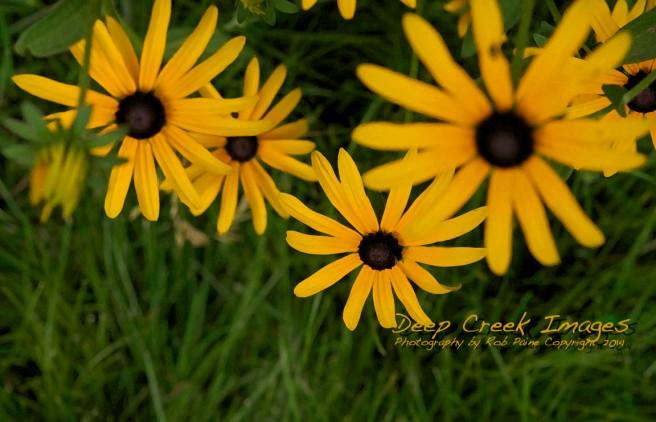 rob paine backyard flowers one