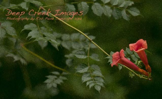 rob paine flowers three