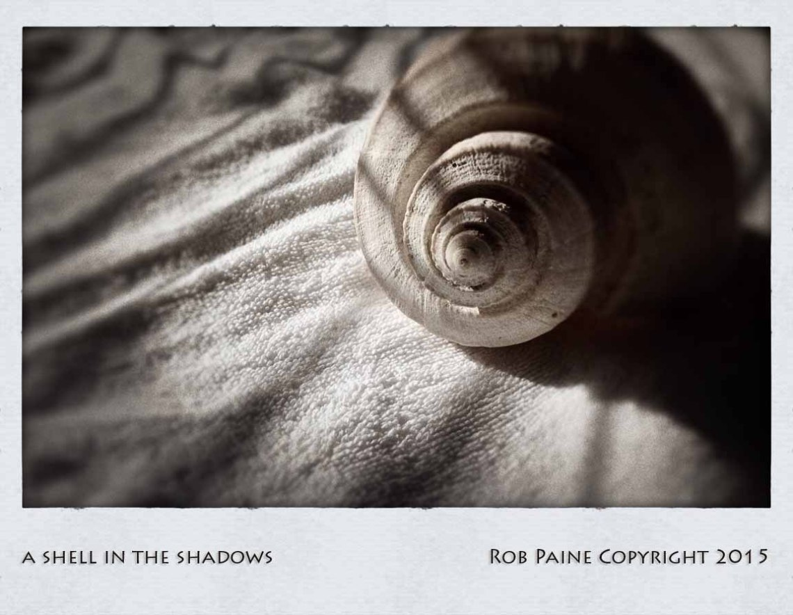 rob paine shell in the shadows