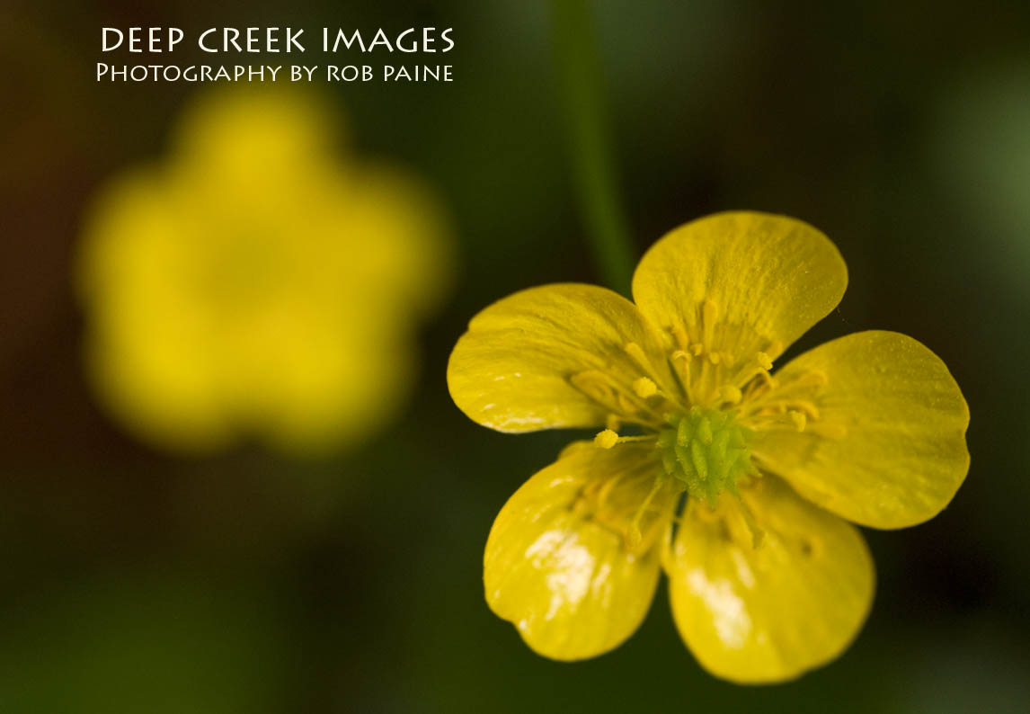Tiny Yellow Flowers I See Beauty All Around By Rob Paine