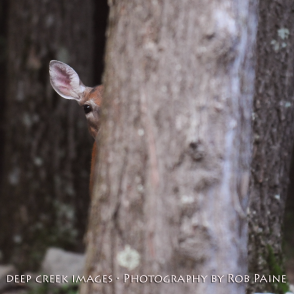 9 Photo by Rob Paine/Deep Creek Images/Copyright 2015