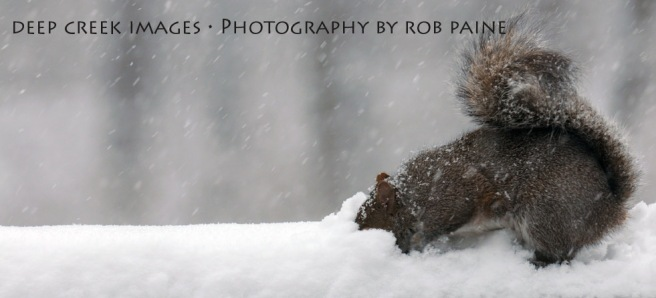 Photo by Rob Paine/Deep Creek Images/Copyright 2015