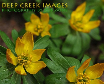 9-Photo by Rob Paine/Deep Creek Images/Copyright 2015