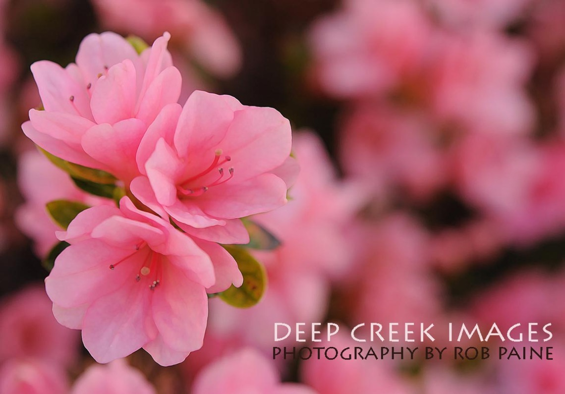 Photo by Rob Paine/Copyright 2025 Deep Creek Images