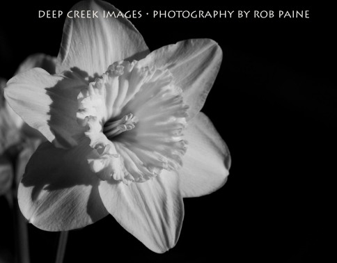 8-Photo by Rob Paine/Deep Creek Images/Copyright 2015