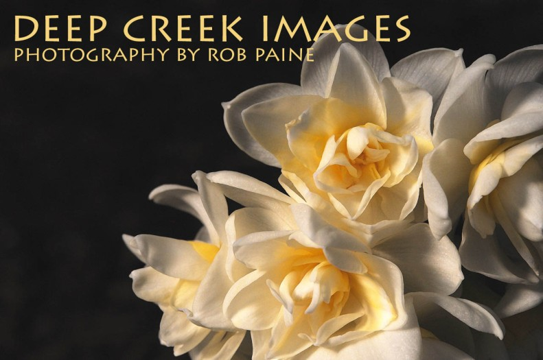 1-Photo by Rob Paine/Deep Creek Images/Copyright 2015