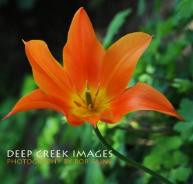 12-Photo by Rob Paine/Deep Creek Images/Copyright 2015
