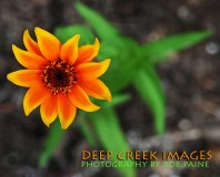 2-Photo By Rob Paine/Deep Creek Images/Copyright 2015