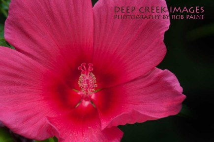 1- Photo by Rob Paine/Deep Creek Images/Copyright 2015