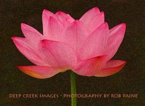 11-Photo by Rob Paine/Deep Creek /Copyright 2015