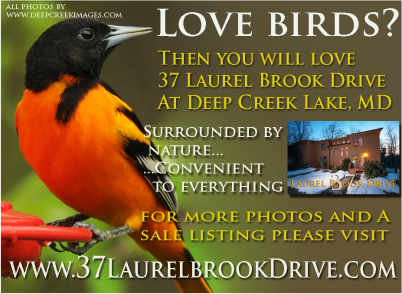 To Visit the home page for 37 Laurel Brook please click on the Oriole!