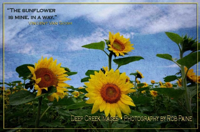 """Photo by Rob Paine/Deep Creek Images/From the new book """"Saying it With Flowers : Flowery Quotes by Famous People and the Flower Photos of Rob Paine, Copyright 2016"""