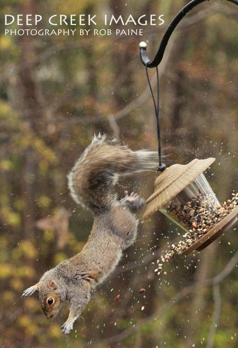squirrel-fall